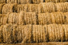 Harvest(cleaning) of cereals Stock Photo