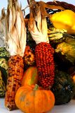 Harvest close-up. Close-up of fall harvest of pumpkin, squash, corn and goards in basket Stock Images