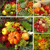 Harvest collage Royalty Free Stock Photos