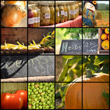 Harvest collage Royalty Free Stock Images