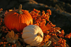 Harvest Colors Royalty Free Stock Image