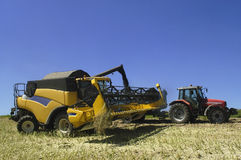 The harvest of colza Royalty Free Stock Images