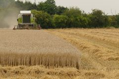 Harvest with combine harvester Royalty Free Stock Photography