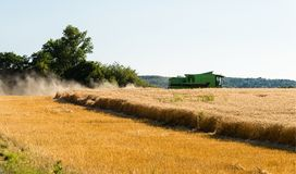 During the harvest, the combine mows the ripe wheat in the field. stock image
