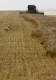 Harvest Combining Saskatchewan Stock Photos