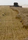 Harvest Combining Saskatchewan Stock Photos