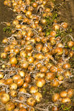Harvest company Stock Photo