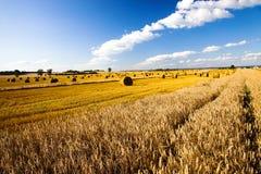 Harvest company Stock Photos
