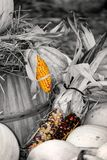 Harvest concept Royalty Free Stock Photography