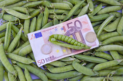 Harvest concept- euro money banknot on ripe pea pods Stock Photo