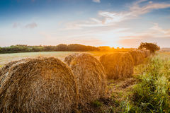Harvest concept haystacks on sunset field Stock Photography