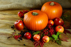 Harvest concept with pumpkins, berries and apples stock photos