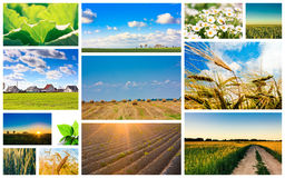 Harvest Concepts. Cereal Collage Stock Photos