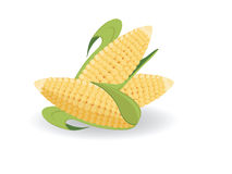 Harvest of corn. Several ears of corn against the white background Stock Photos