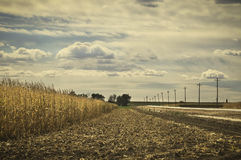 Harvest Of A Corn Field Royalty Free Stock Photos