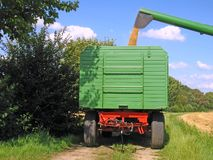 Harvest on a cornfield. A combines loaded a trailer with cereal Stock Photography