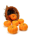 Harvest cornucopia. Harvest or Thanksgiving cornucopia of pumpkins on a white background Stock Photography