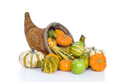 Harvest Cornucopia royalty free stock photos