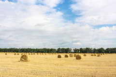 Harvest country landscape Stock Photos