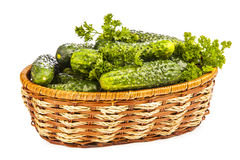 Harvest cucumbers in a basket Stock Image