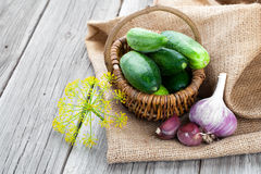 Harvest cucumbers in a basket Royalty Free Stock Image