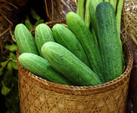 Harvest cucumbers and dill in a basket Stock Photos