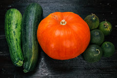 Harvest of cucurbits Royalty Free Stock Photography