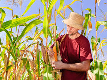 Harvest day Stock Photography