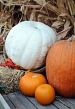 Harvest decoration Stock Photography