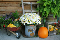 Harvest Decorations Stock Images