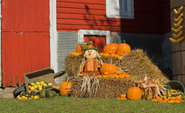 Harvest Display with scarecrow. A harvest display with a scarecrow and hay bales.  Red barn in background Stock Photos