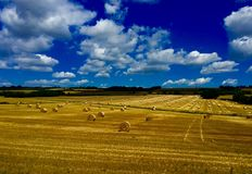 Harvest. In England Royalty Free Stock Photo