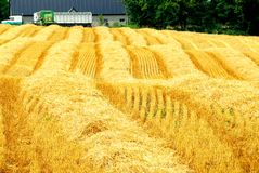 Harvest farm field Royalty Free Stock Photo