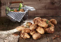 Harvest of farm fresh potatoes Stock Photos