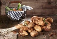 Harvest of farm fresh potatoes Stock Photos