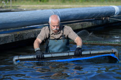 Harvest farmed fish Stock Images