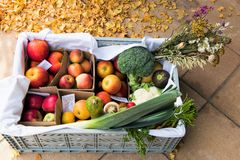 Composition of the Autumn with various kinds of apples, greens and vegetables stock images