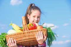 Harvest festival concept. Childhood in countryside. Kid farmer with harvest blue sky background. Girl kid rustic style royalty free stock image