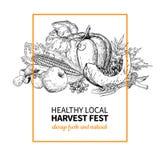 Harvest festival. Hand drawn vintage vector illustration with group of vegetables, fruits, leaves. Farm Market Stock Illustration