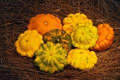 Harvest Festival. Ripe squash lie on a pile of autumn grass Stock Photos