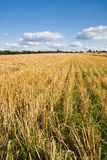 Harvest field Royalty Free Stock Photos