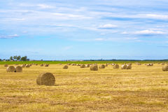 Harvest on the field Royalty Free Stock Images