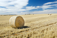 Harvest Field Stock Image