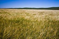 Harvest field Stock Photos