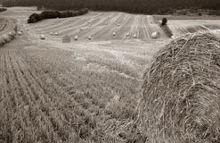 Harvest field bale of straw Royalty Free Stock Images
