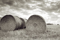 Harvest field bale of straw Royalty Free Stock Image