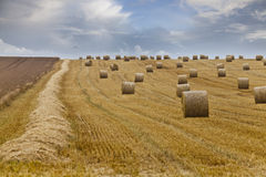 After Harvest Royalty Free Stock Photography