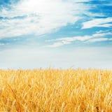 Harvest field and cloudy sky Stock Photos