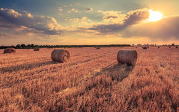 Harvest on the field. Hay rolls during sunset. Dramatic sky, harvest time Stock Images