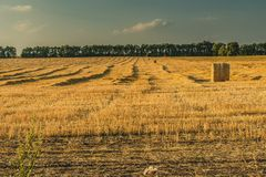 Harvest in a field Royalty Free Stock Images